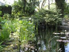 Garten-Duemlen04